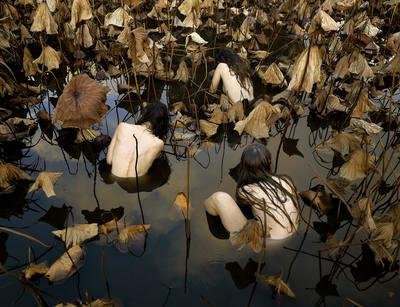 Sacred Lotus (Nelumbo nucifera) in Autumn from the series 'In our Nature'